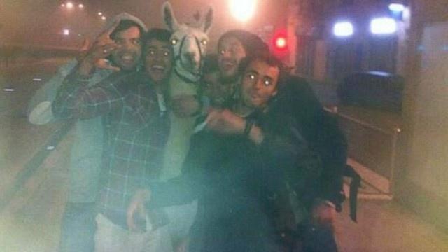 Drunk teens steal circus llama, take it for joyride | News - Home
